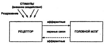 Функциональная схема анализатора.