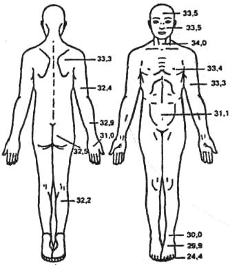 Топография кожной температуры у человека
