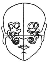 Расположение вестибулярного аппарата в костях черепа