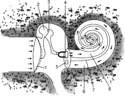 Схема распространения звука в