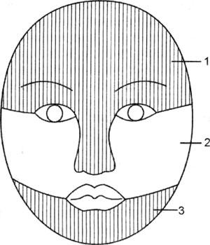 Схема зон периферической иннервации кожи лица ветвями тройничного нерва