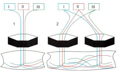 Схема иннервации мышц волокнами, идущими от различных сегментов, в составе одного нерва или двух нервов