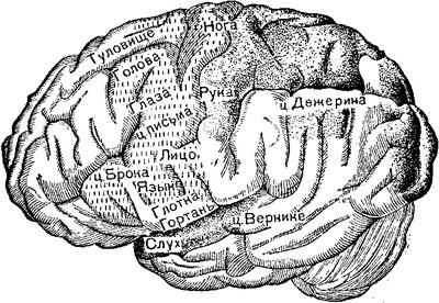 Центры на наружной поверхности головного мозга (по Раубер-Копшу). Штриховкой точками обозначены сенсорные центры, вертикальными чёрточками — двигательные центры