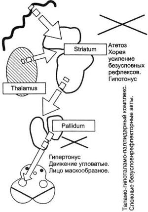 Схема таламо-гипоталамо-паллидарного комплекса