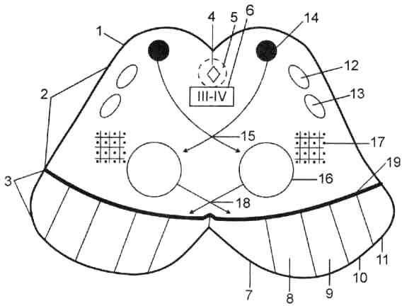 Топография ядер серого вещества и проводящих путей на разрезе среднего мозга