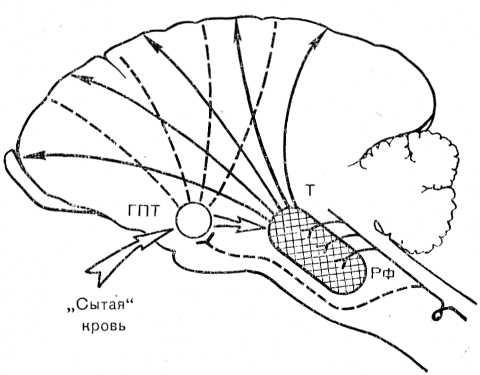 Рис. 16. Схема энергетической основы мотивационного возбуждения. Избирательные восходящие, активирующие влияния пейсмекерных гипоталамических центров на кору больших полушарий (слева) и устранение восходящих влияний у накормленных животных (справа). ГПТ — гипоталамус; Т — таламус; РФ — ретикулярная формация среднего мозга.