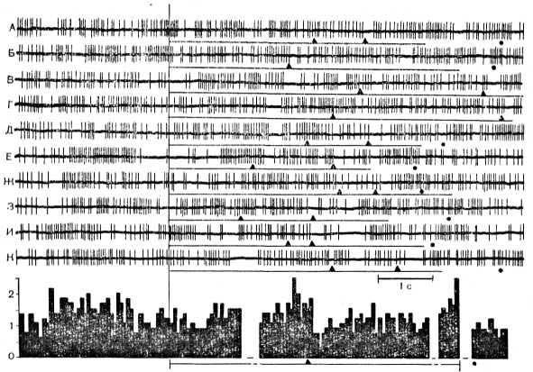 Рис. 18. Нейронограмма (A-К) и суммарная гистограмма импульсной активности (внизу) одного и того же нейрона зрительной области коры головного мозга при повторном выполнении инструментального условного рефлекса. Горизонтальные линии: начало — включение; конец — выключение звука. Стрелка — нажатие на педаль, точка — начало лакания. Ширина канала на гистограмме 60 мс.
