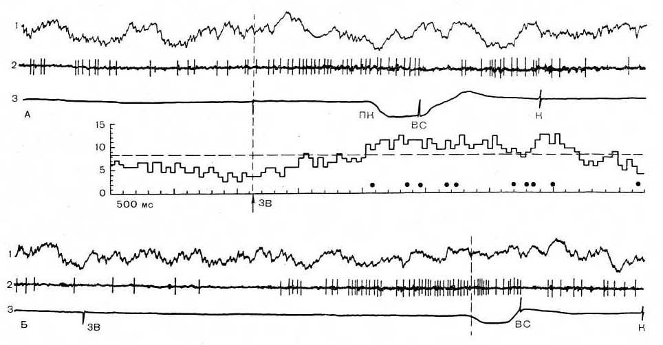 Рис. 22. Выявление активности, предшествующей результату, методом обратного усреднения. А — усреднение от звука выявляет позднюю активацию; закрашенные кружки обозначают моменты потягивания кольца; Б — при обратном усреднении от момента потягивания кольца активация более выражена; незакрашенные кружки обозначают момент подачи звука; В — связь активности с «межсигнальными» потягиваниями, когда звук отсутствовал. На каждом фрагменте: 1—ЭЭГ зрительной коры, 2— нейронограмма, 3 — поведенческие отметки: ЗВ — звуковой щелчок, ПК — потягивание кольца, ВС — вспышка света, К — подача кормушки. Внизу — усредненная гистограмма активности нейрона в 10 поведенческих актах.