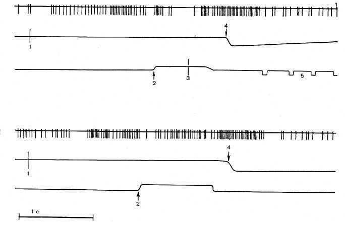 Рис. 24. Активация нейрона гиппокампа при «правильном» (вверху) и «ошибочном» (внизу) поведенческом акте. На каждом фрагменте сверху вниз: нейронограмма и отметки раздражителя (те же, что на рис. 23).