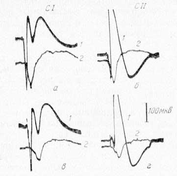 Зависимость величины ответа в ретикулярной формации среднего мозга (2) от амплитуды ответа в сомато-сенсорной области коры