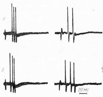 Кортикофугальные реакции одиночных нейронов ретикулярной формации среднего мозга, вызванные стимуляцией корковых областей CI (а) и СII (б)