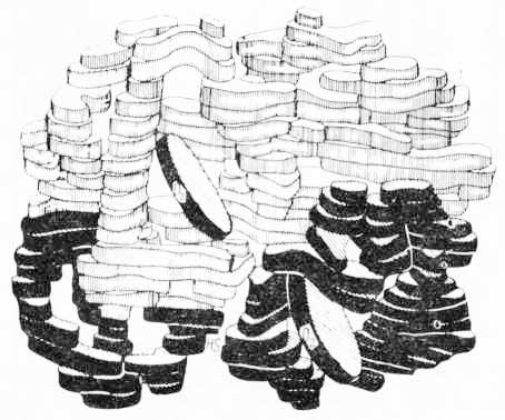 Четвертичная структура молекулы гемоглобина (по М. Перутцу, 1964)
