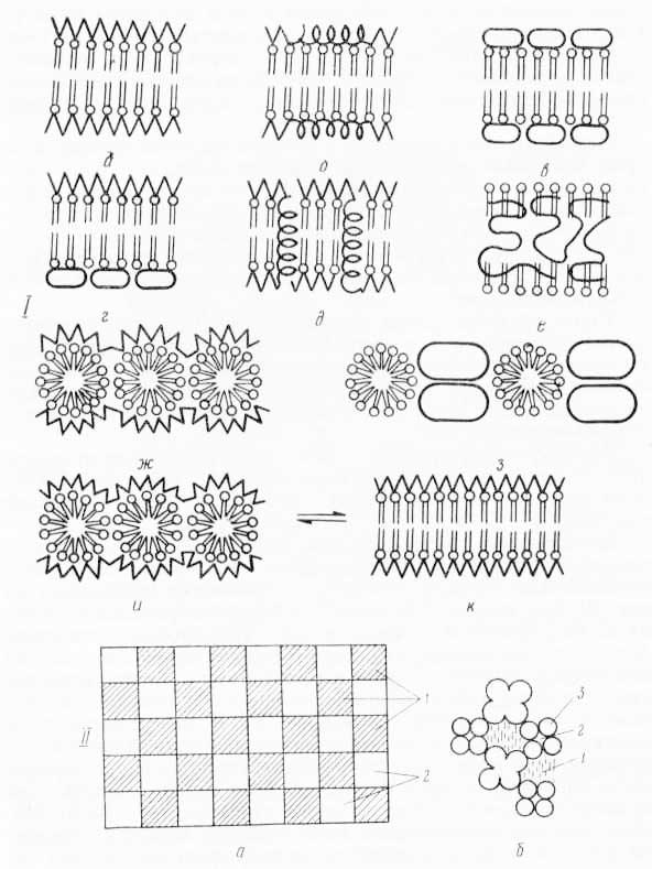 28.1 Различные модели молекулярного строения биологических мембран