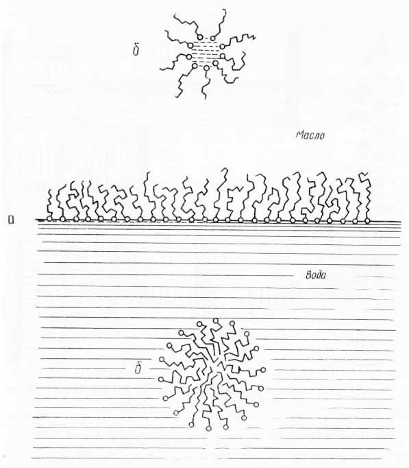 Схема расположения полярных липидов (из Ж. Хаггиса, Д. Михи и др., 1967)