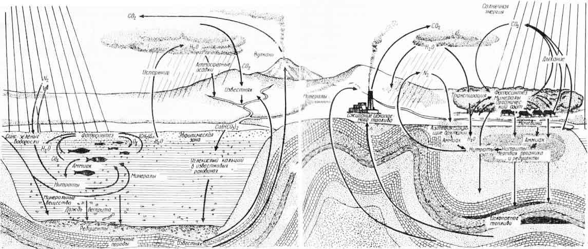 Рис. 2. Схема круговорота веществ в природе (из Дж. Хатчинсона, 1972)