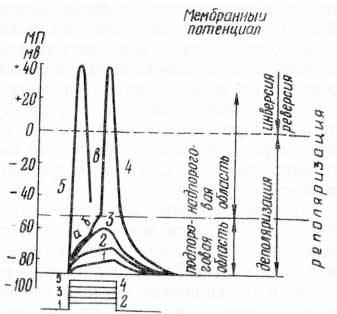 Изменение мембранного потенциала в зависимости от силы наносимого раздражения длительностью 2 мс (по Б. Катцу, 1968 и Е. К. Жукову, 1969)