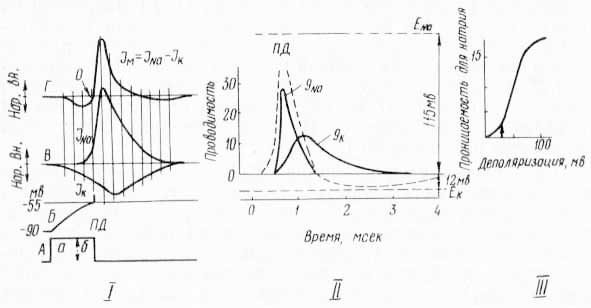 Механизм возникновения потенциала действия (по Е. К. Жукову, 1969; Ходжин и Хаксли, 1952)